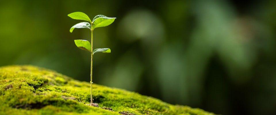 I migliori gadget ecologici