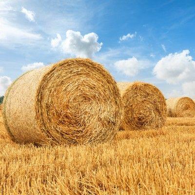 Oggetti in paglia di grano