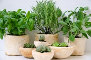 vasi realizzati con plastica di funghi